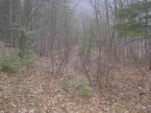 Abandoned Catskill Mountain RR