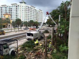Nearly block-long row of mature palms near CityPlace buzz-sawed