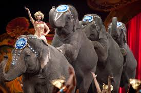 The End Of Circus Elephants