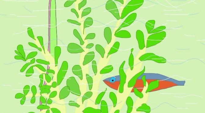 Baltic sea as an aquarium