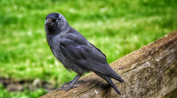 Why a raven is like a writing desk?