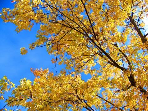 autumn-20797_1920