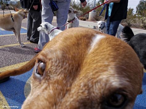 72-Dog-Face-GAR-Sunday-011016_928