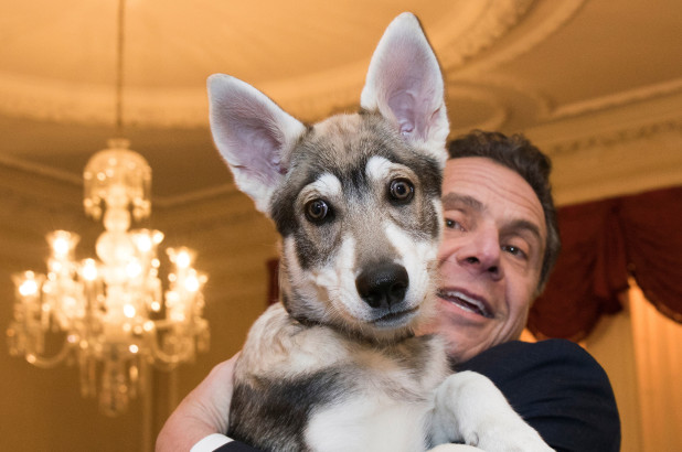Cuomo's dog was secretly promoted to 'Captain'